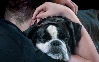 image for February is Responsible Pet Ownership Month!